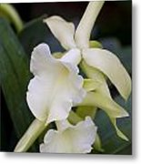 Orchids Pictures 53 Metal Print
