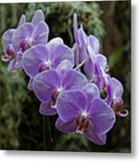 Orchids Square Format Img 5437 Metal Print