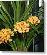 Orchids - Us Botanic Garden - 01137 Metal Print by DC Photographer