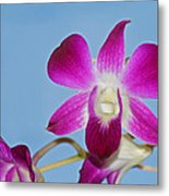 Orchids With Blue Sky Metal Print