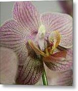 Orchids5 Metal Print