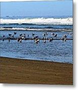 Oregon Coast Seabirds Metal Print