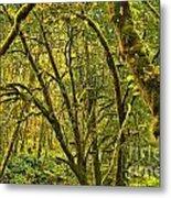 Oregon Rainforest Metal Print