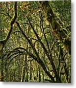 Oregon Rainforest Green Metal Print