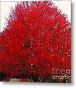 Oregon Red Maple Beauty Metal Print
