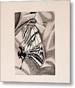 Oregon Swallowtail Butterfly  Metal Print