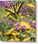 Oregon Swallowtail In The Garden  Metal Print
