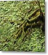 Oregon Tree Metal Print