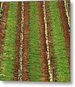 Oregon Vineyard Rows Panoramic Metal Print