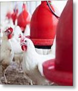 Organic Chicken Coop  Metal Print