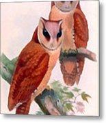 Oriental Bay Owl Metal Print