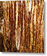 Ornamental Golden Grass Metal Print