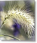 Ornamental Sweet Grass Metal Print