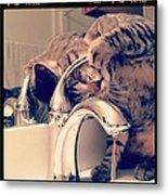 Oskar At The Faucet Metal Print