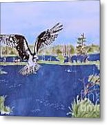 Osprey At Tuttle Marsh Metal Print
