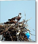 Osprey Couple Metal Print