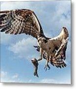 Osprey In The Clouds Metal Print
