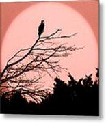 Osprey Moon Metal Print