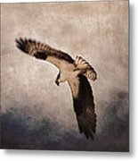 Osprey Over The Columbia River Metal Print