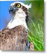 Osprey Profile Metal Print
