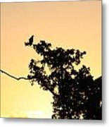 Osprey Sunset Metal Print