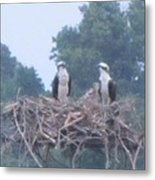 Osprey's Chatting On The Chesapeake Bay Metal Print