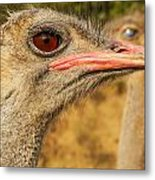 Ostrich Closeup Metal Print by Jess Kraft