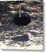 Ostrich Dance Metal Print