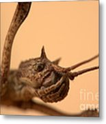 Other Insects No.001 Metal Print