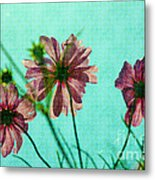 Otherworldly Cosmos Flowers In Pink And Green Metal Print