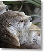 Otter And Family Metal Print