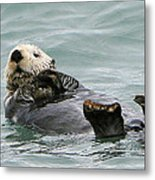 Otter At Play Metal Print