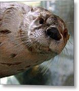 Otter Be Lookin' At You Kid Metal Print