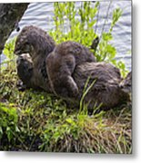 Otter Family Fun Metal Print