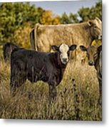 Out For A Graze Metal Print