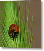 Out For A Snack Metal Print