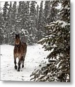 Out For A Walk Metal Print