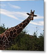 Out Of Africa 3 Metal Print