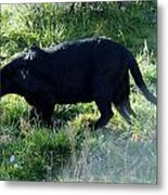 Out Of Africa  Black Panther Metal Print