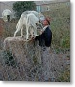 Out Of Africa  Friendly Wolves Metal Print