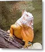 Out Of Africa Orange Lizard 1 Metal Print