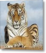 Out Of Africa Tiger 3 Metal Print
