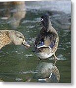 Out Of My Roosting Ice Spot Shorty Metal Print