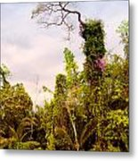 Out Of The Jungle Metal Print