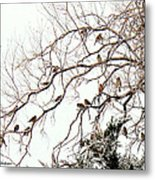 Out On A Limb First Snow Metal Print