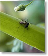 Out To Lunch Metal Print