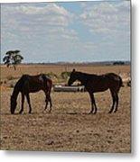 Outback Horses Metal Print