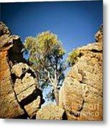 Outback Tree Metal Print