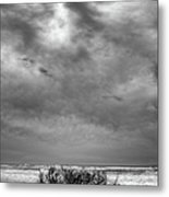 Outer Banks - Driftwood Bush On Beach In Surf IIi Metal Print