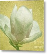 Outer Magnolia Metal Print